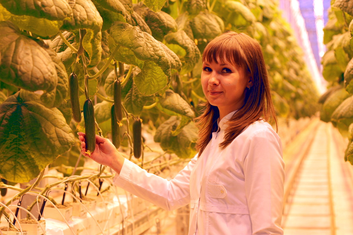 Greenhouse vegetables: customer demand, expectations, and preferences