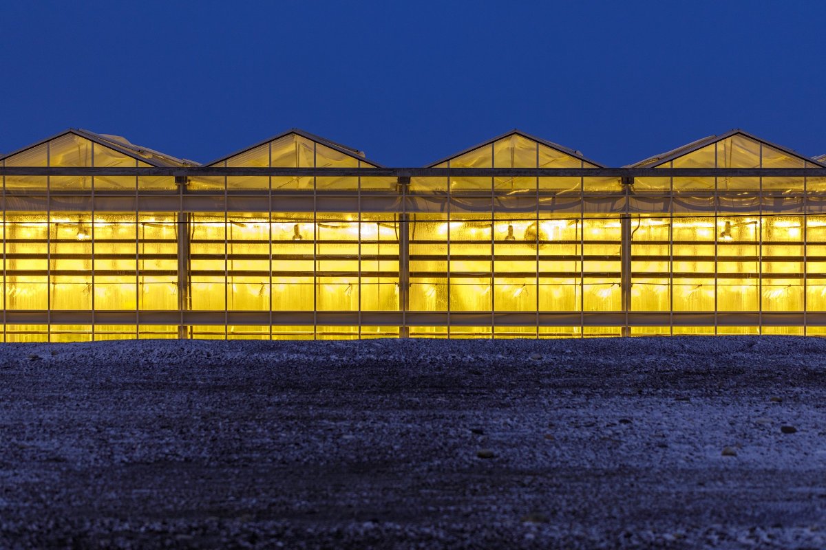 The biggest greenhouse complex in the Moscow region is being built in Voskresensk