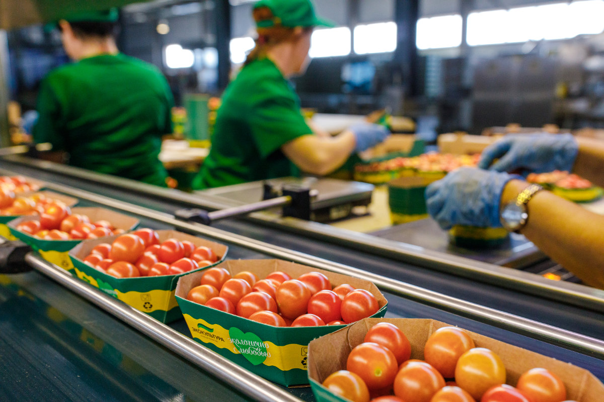 ECO-culture proposes to limit the markup for vegetable products produced by Russian greenhouse enterprises