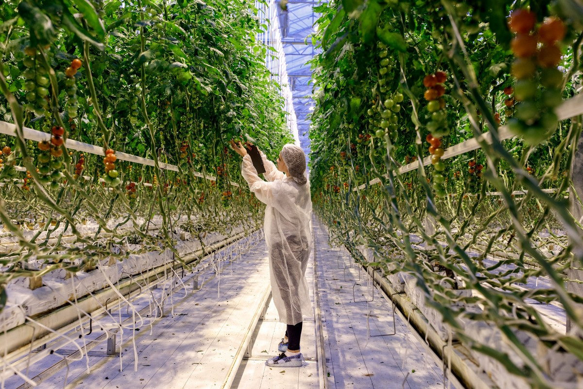 On the development prospects of the greenhouse industry in Russia
