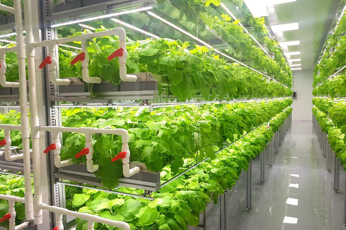 Vertical farms as technology of the future: Alexey Shemetov's opinion